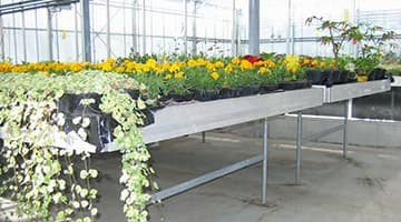 Fixed benches for professional greenhouse