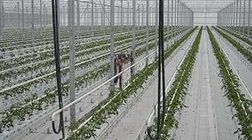 greenhouse heating transmitter