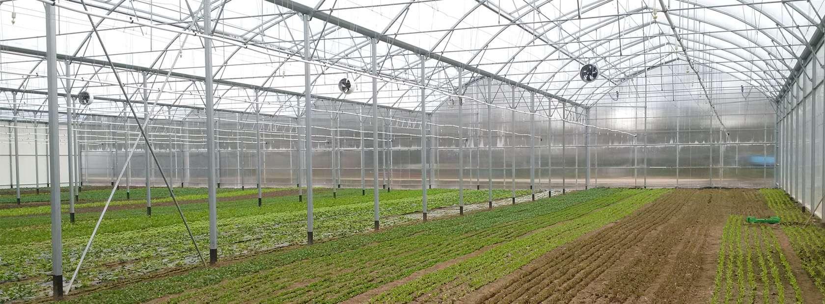 Organic vegetable crops, Les jardins de Cocagne, France ...